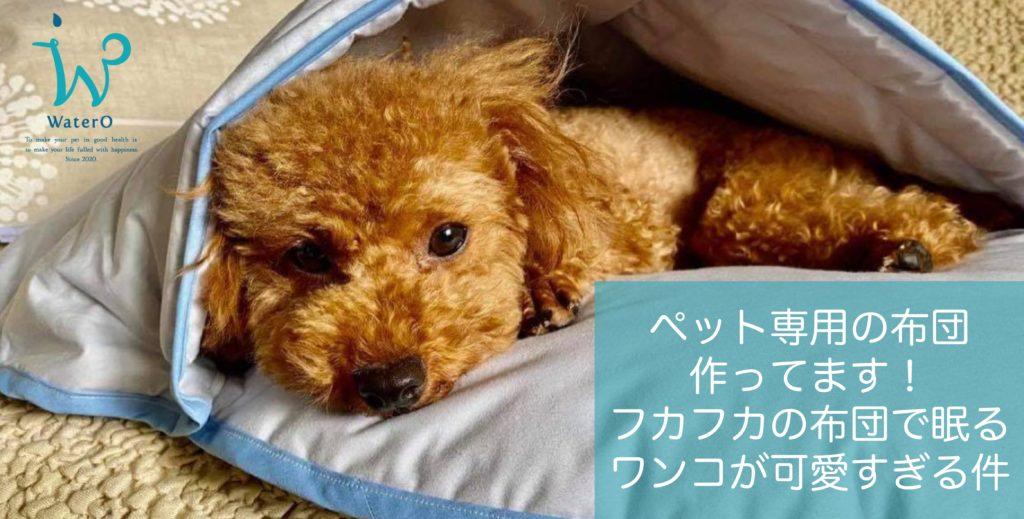 ペット専用の布団、作ってます!フカフカの布団で眠るワンコが可愛すぎる件。