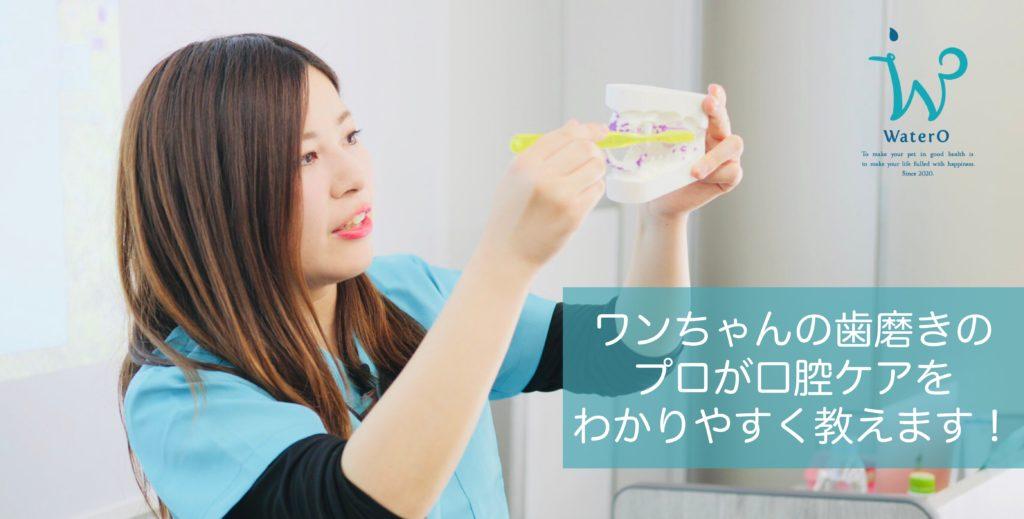 ワンちゃんの歯磨きのプロが口腔ケアのポイントをわかりやすく教えます!
